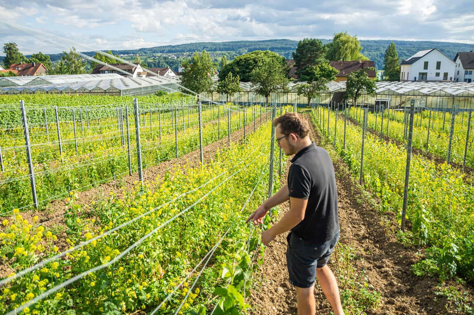 Umstellung auf Biologischen Weinanbau